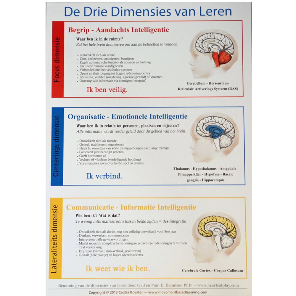 Poster De Drie Dimensies Van Leren (44 Cm X 31 Cm) (Nederlands)